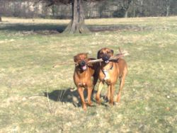 Still enjoying the stick game!