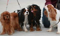 from left: Sparky, Monty, Bobesh, Ricky