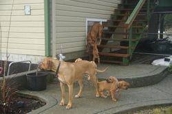 Akala and pups