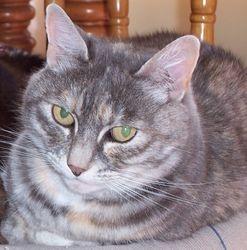 Photo of Tiki