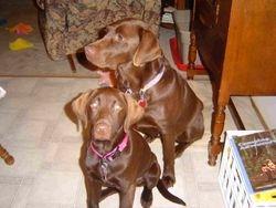 Koko and Kassey November 2004