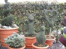 Specializing in Topiary