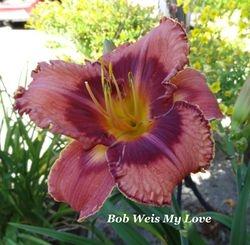 Bob Weiss My Love