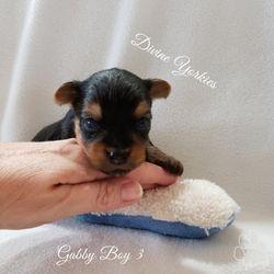 Gabby Boy 3