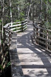 Corkscrew Boardwalk 2