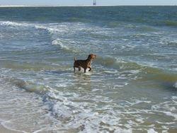 Fun at the Beach!