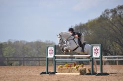Pepperjack - High Schooling Jumper, Sunday Funday Jumper Show