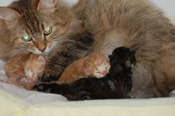 Jokotai med sine 3 soenner:-)
