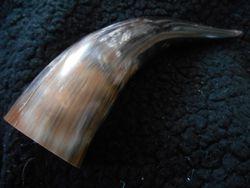 Kohorn/ Cow horn 2