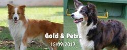 Petra e Gold (Importado da Alemanha) Os pais do filhotes