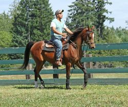 Featured Sale Horse - Dana Justabay Jewel (Justify x Dana Bailey)