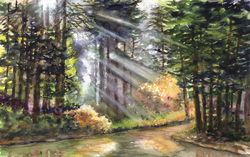 Sunbeams Thru The Redwoods