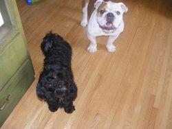 Sampson and Maximus