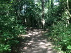 Llynclys common woodland