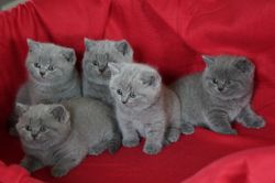 all together 6 weeks old