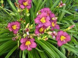 Plants 2012