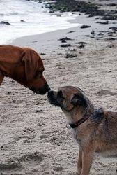 A random friend on Dalgety Bay beach
