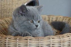 Cassius, 12 weken oud