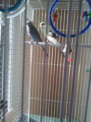 Petey Birds