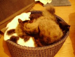 3 cats in a Basket