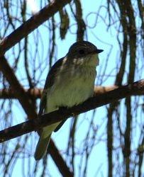 Mallorcan bird