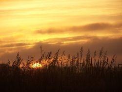 Riverton Highway Sunset - through the grass
