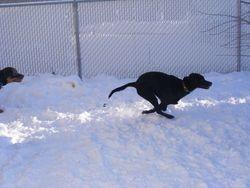 Dakota such a fast girl