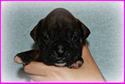 Rory 3 Weeks SOLD