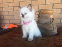 Pinky Born Born Christmas Eve 2015
