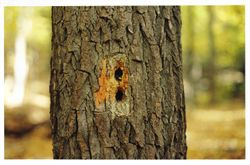 Holes made by a woodpecker?