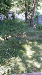 wild yard before