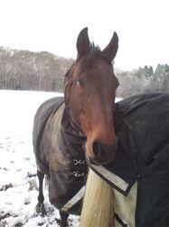Emir & Atlanta in the snow