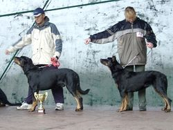 Club Show Jun.Club Winner and Best Junior: BOTEIN Astra Canina