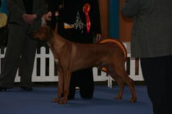 Sam at Top Dog of Scotland