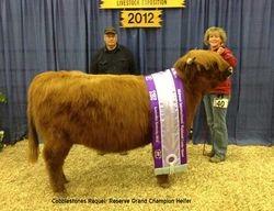 Bull Run's Reserve Grand Champion