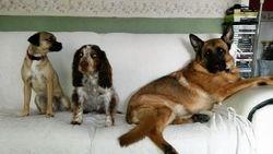 Oscar and friends