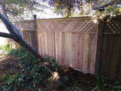 Repaired one section of fence only