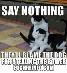 Say nothing! They'll blame the dog for stealing the bower.