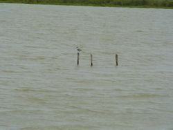 Posts in the Saltwater Lake