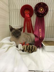 Reuben at 7 months old at his very first show