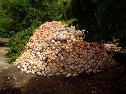 Conch shell mountain!