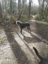 Crowthorne Dog Walkers