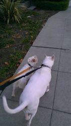 Walking buddies
