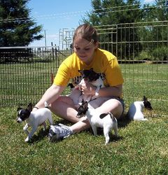 Mandy and Puppies