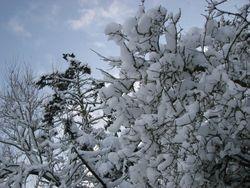 Jan 10, snow 8