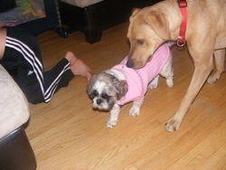 Caidence likes Pugsy's jacket
