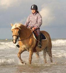 Poney à la plage