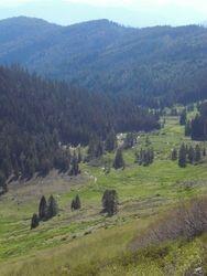 a high mountain meadow