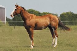 She Really Glows, aka Fergie is an APHA mare