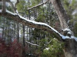 SNOW BRANCH FOCUS